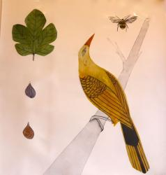 Hybrid Gallery Bea Forshall Golden Oriole