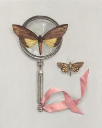 Hybrid Gallery Rachel Ross Moths with Magnifying Glass