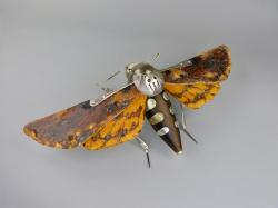 Hybrid Gallery Dean Patman Death's Head Hawk Moth